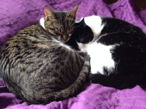 My two cats Ada and Curie having a nice nap together.