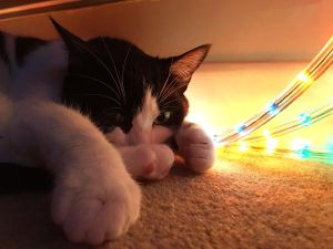 A cosy cat warming on christmas lights stretches out a paw to the camera.