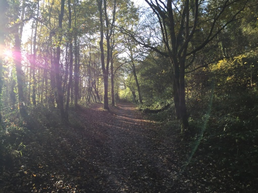 A forest view of a cycle path with a little sunlight.